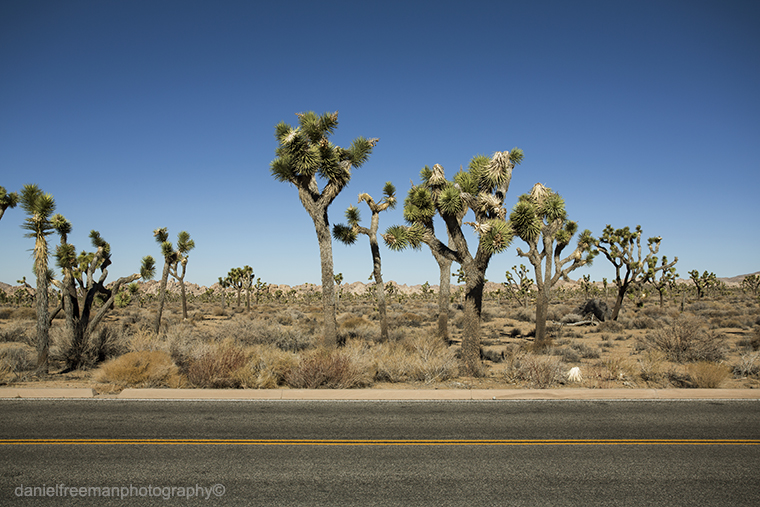 USA in Colour Pt2: Amboy, 29 Palms and Joshua Tree